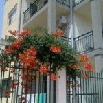 Почивка в Приморско | Къща за гости Костови (Бон Маман)