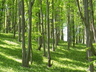 Красива природа и чист въздух в Стара планина | Природен парк Българка